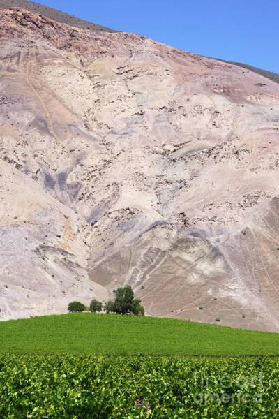 Photograph - Vines In The Atacama Desert Chile by James Brunker