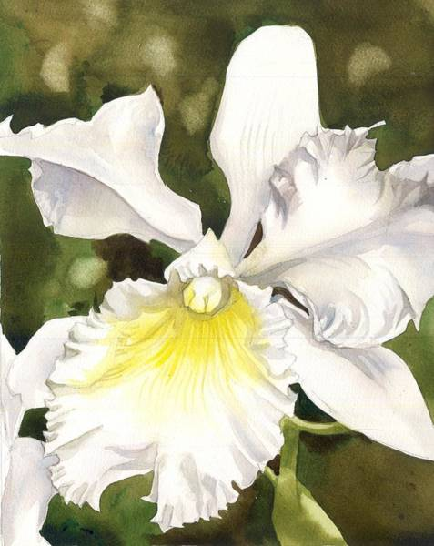 Painting - White Cattleya Orchid by Alfred Ng