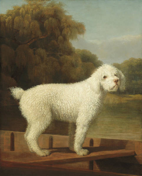 Painting - White Poodle In A Punt by George Stubbs