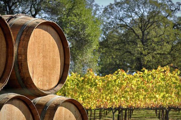 Photograph - Wine Barrel by Brandon Bourdages