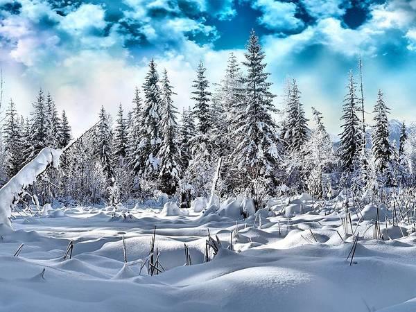 Landscape Digital Art - Winter by Maye Loeser