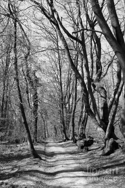 Photograph - Woodland Walk by Julia Gavin