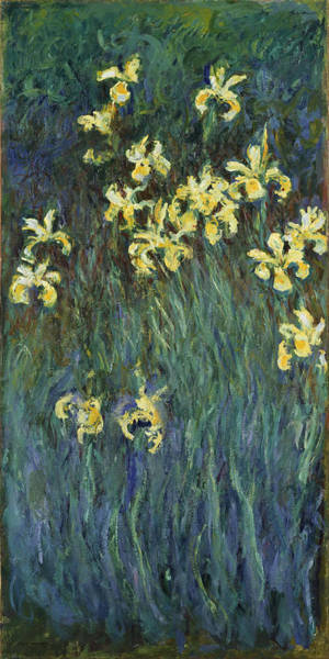 Painting - Yellow Irises by Claude Monet