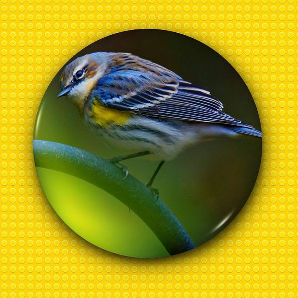 Photograph - Yellow-rumped Warbler by Robert L Jackson