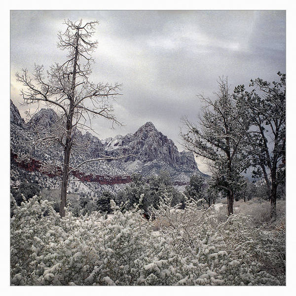Wall Art - Photograph - Zion Snow by Robert Fawcett