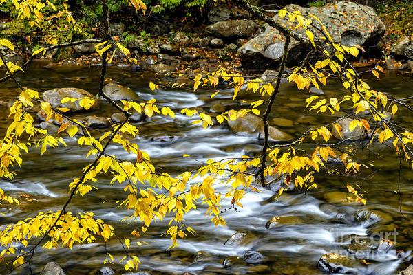 Birch River Photograph - Fall Along Williams River by Thomas R Fletcher