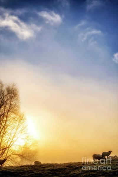 Photograph - Misty Mountain Sunrise by Thomas R Fletcher