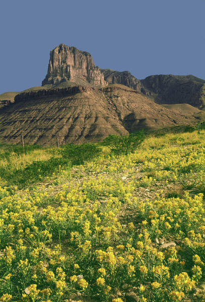 Photograph - 317706 Spring Wildflowers And El Capitan Texas by Ed Cooper Photography