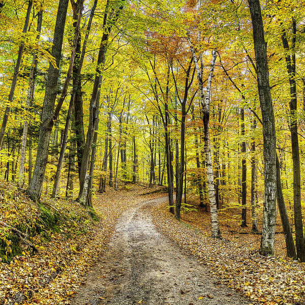Wall Art - Photograph - Fall In Sleeping Bear Dunes by Twenty Two North Photography