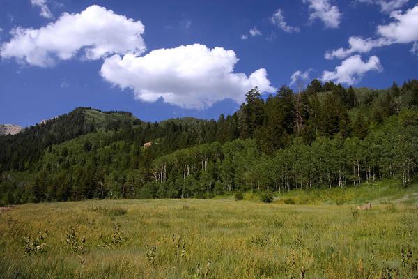 Photograph - Mountain Meadow by Mark Smith