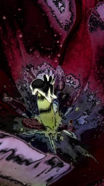 Photograph - Abstract Flowers by Belinda Cox