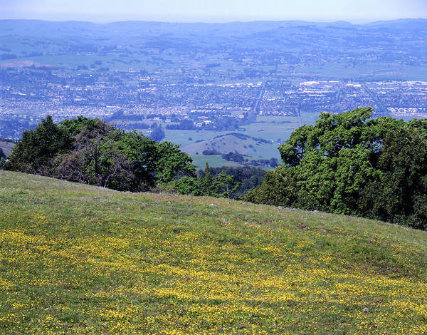 Photograph - 3b6387 Wildflowers On Sonoma Mountain by Ed Cooper Photography