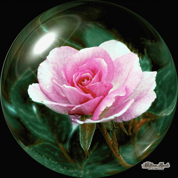 Photograph - 3d Pink Rose Sphere by William Havle