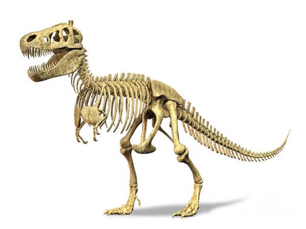 Cutout Digital Art - 3d Rendering Of A Tyrannosaurus Rex by Leonello Calvetti