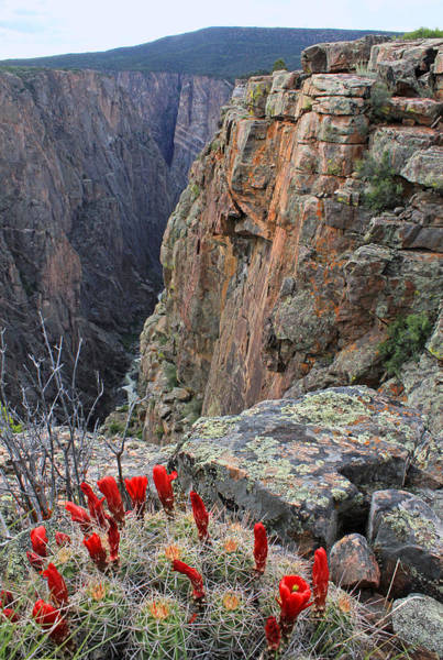 Photograph - 3d10308 Narrows View North Rim by Ed Cooper Photography
