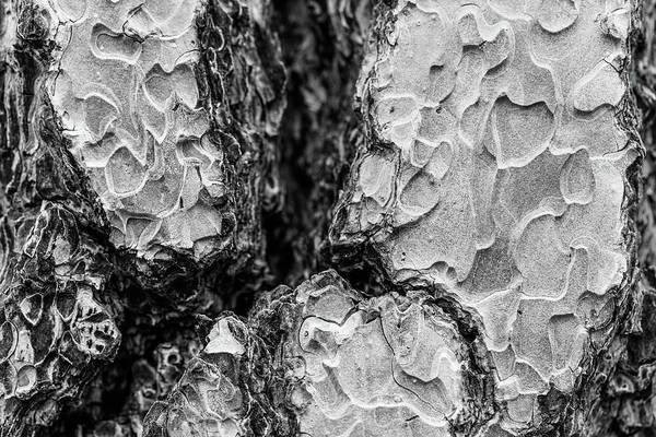 Photograph - 3dtree by Scott Campbell