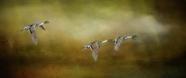Photograph - All In A Row by Marilyn Wilson