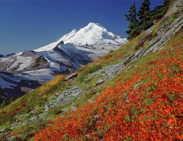 Photograph - 3m4203 Mt. Baker In Fall H by Ed Cooper Photography