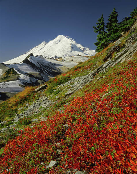 Photograph - 3m4204 Mt. Baker From Northeast by Ed Cooper Photography