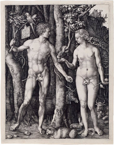 Drawing - Adam And Eve by Albrecht Durer