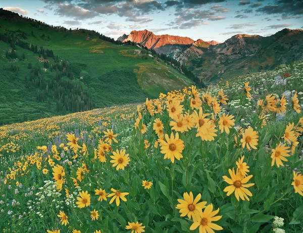 Big Basin Photograph - Albion Basin Wildflowers by Douglas Pulsipher