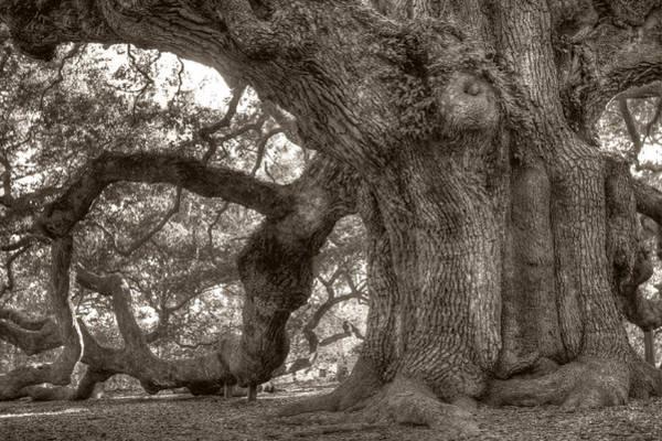 Photograph - Angel Oak Live Oak Tree by Dustin K Ryan