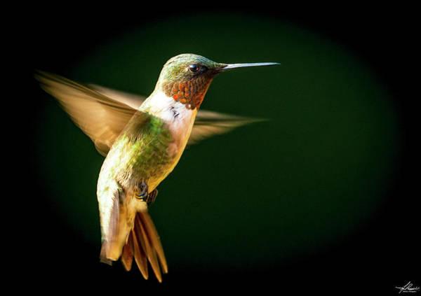 Photograph - Backyard Hummingbird by Philip Rispin