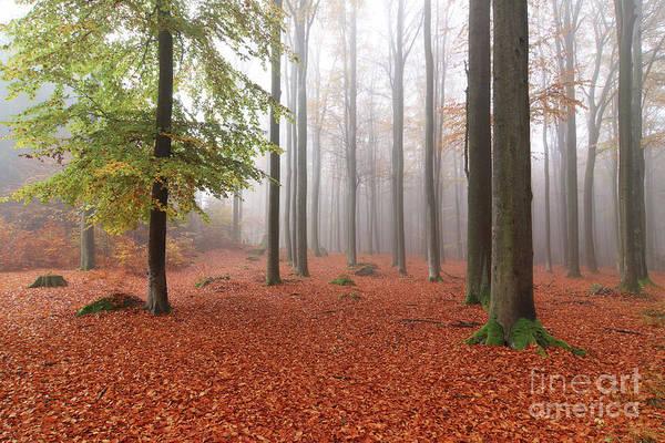 Tourism Wall Art - Photograph - Beech Forest In Autumn by Michal Boubin