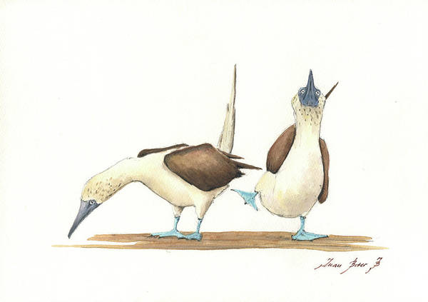 Drawing Painting - Blue Footed Boobies by Juan Bosco