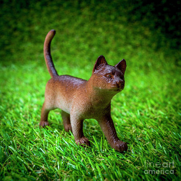 Wall Art - Photograph - Cat Figurine by Bernard Jaubert
