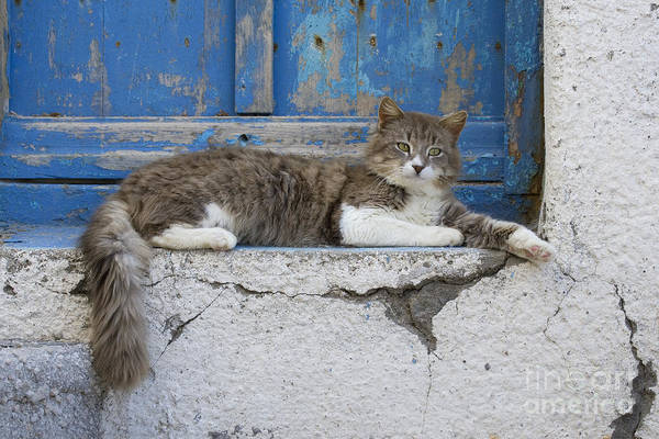 Laying Out Photograph - Cat In A Doorway, Greece by Jean-Louis Klein & Marie-Luce Hubert
