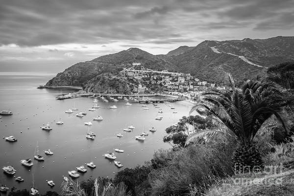 Avalon Wall Art - Photograph - Catalina Island Avalon Bay Black And White Picture by Paul Velgos