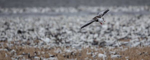 Photograph - Clear For Landing by Ryan Heffron