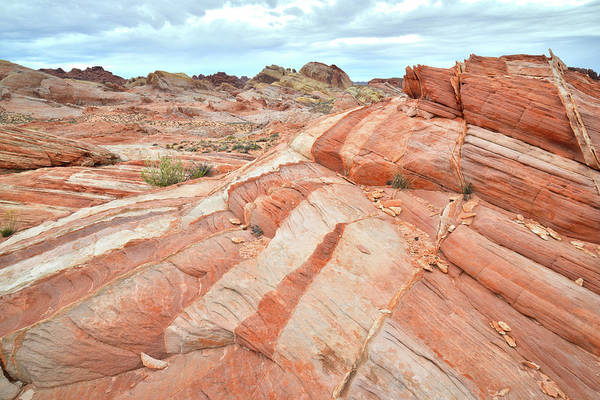 Photograph - Color Wave In Valley Of Fire by Ray Mathis