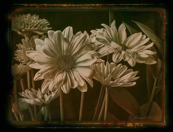 Digital Art - Daisy  by Bonnie Willis