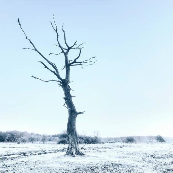 Wall Art - Photograph - Dead Tree by Joana Kruse