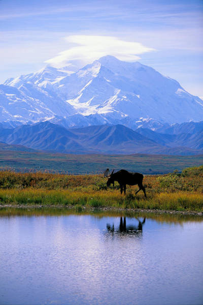 Pacific Northwest Photograph - Denali National Park by John Hyde - Printscapes