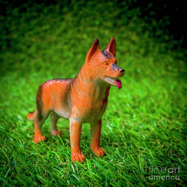 Wall Art - Photograph - Dog Figurine by Bernard Jaubert