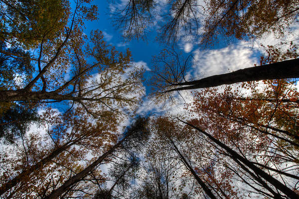 Photograph - Fall In Indiana by Walt Sterneman