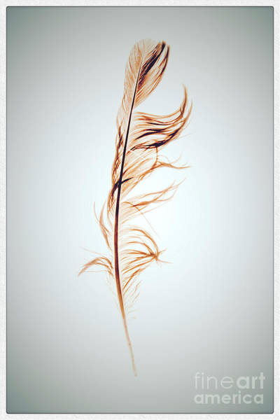 Wall Art - Photograph - Feather by Bernard Jaubert