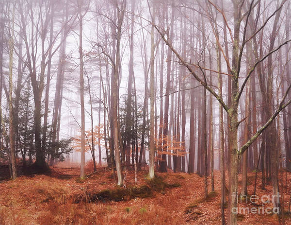 New Leaf Photograph - Fog  by HD Connelly