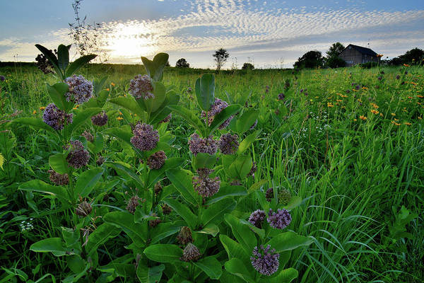 Photograph - Glacial Park Prairie Wildflowers by Ray Mathis