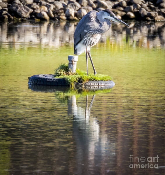 Photograph - Great Blue Heron by Ricky L Jones