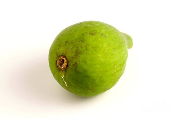 Photograph - Green Fig by Henrik Lehnerer
