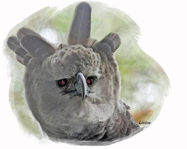 Digital Art - Harpy Eagle by Larry Linton