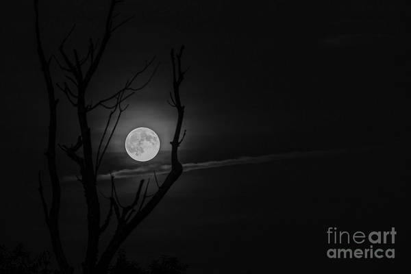 Photograph - Highland Moon  by Thomas R Fletcher