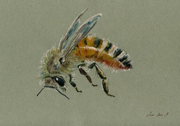Bees Wall Art - Painting - Honey Bee Watercolor Painting by Juan  Bosco