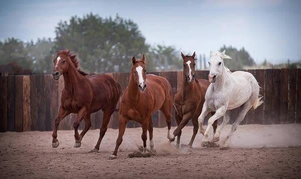 Corral Wall Art - Photograph - 4 Horses by Steve Gadomski