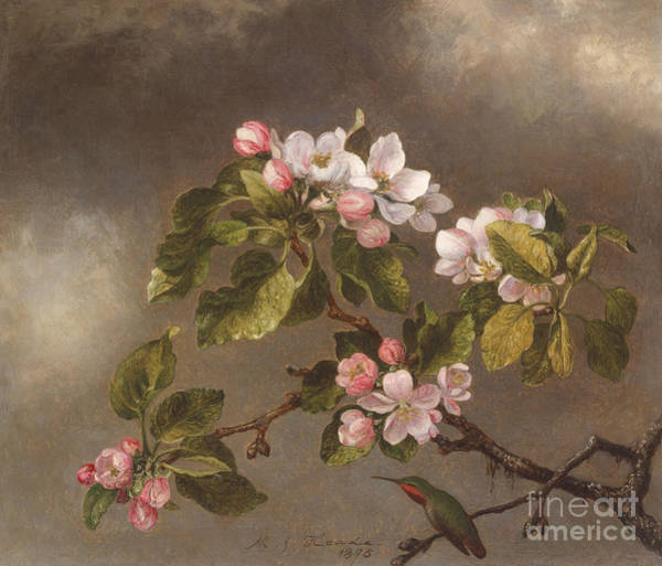 Wall Art - Painting - Hummingbird And Apple Blossoms by Martin Johnson Heade