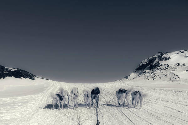 Hund Wall Art - Photograph - Huskies In Ilulissat, Greenland by Joana Kruse